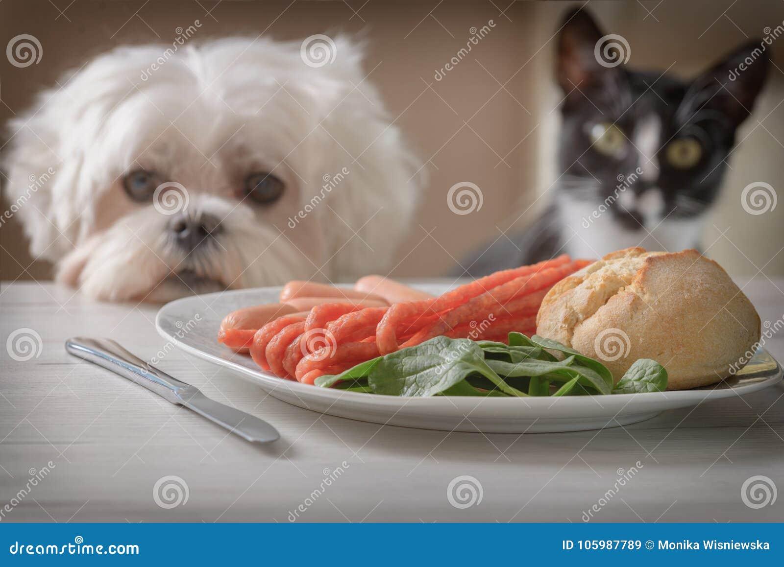 Cão e gato bonito que pede o alimento