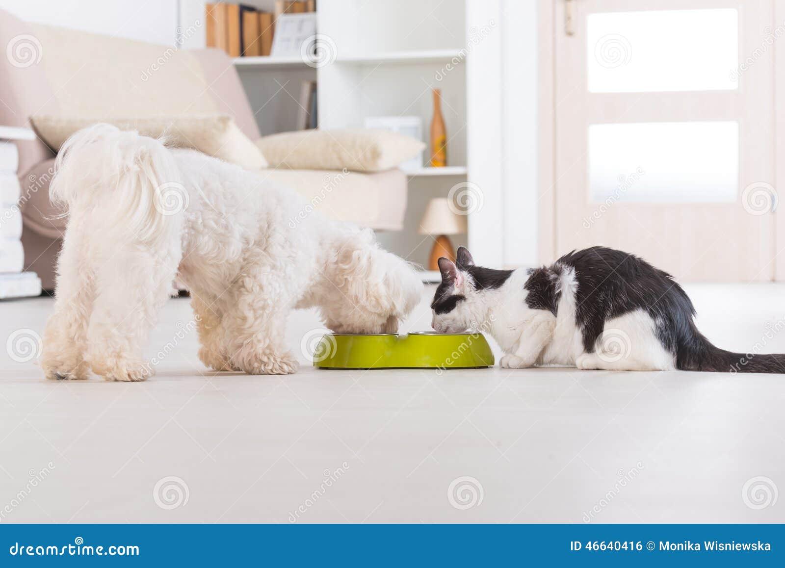 Cão e gato que come o alimento de uma bacia