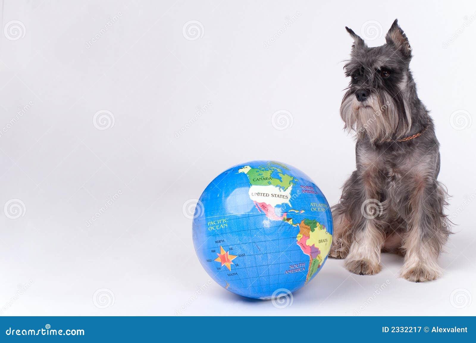 Cão e o globo
