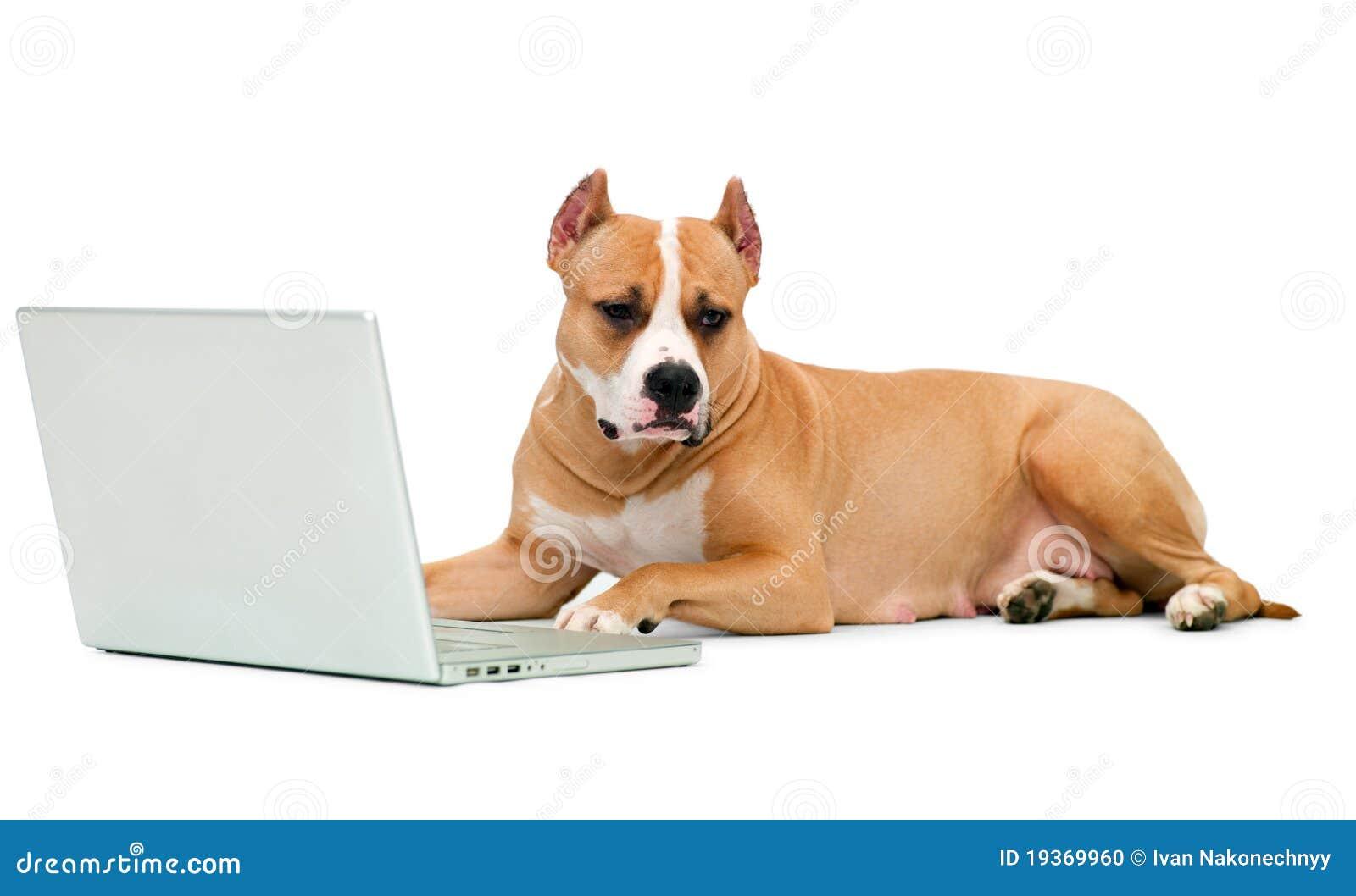 Cão e um computador