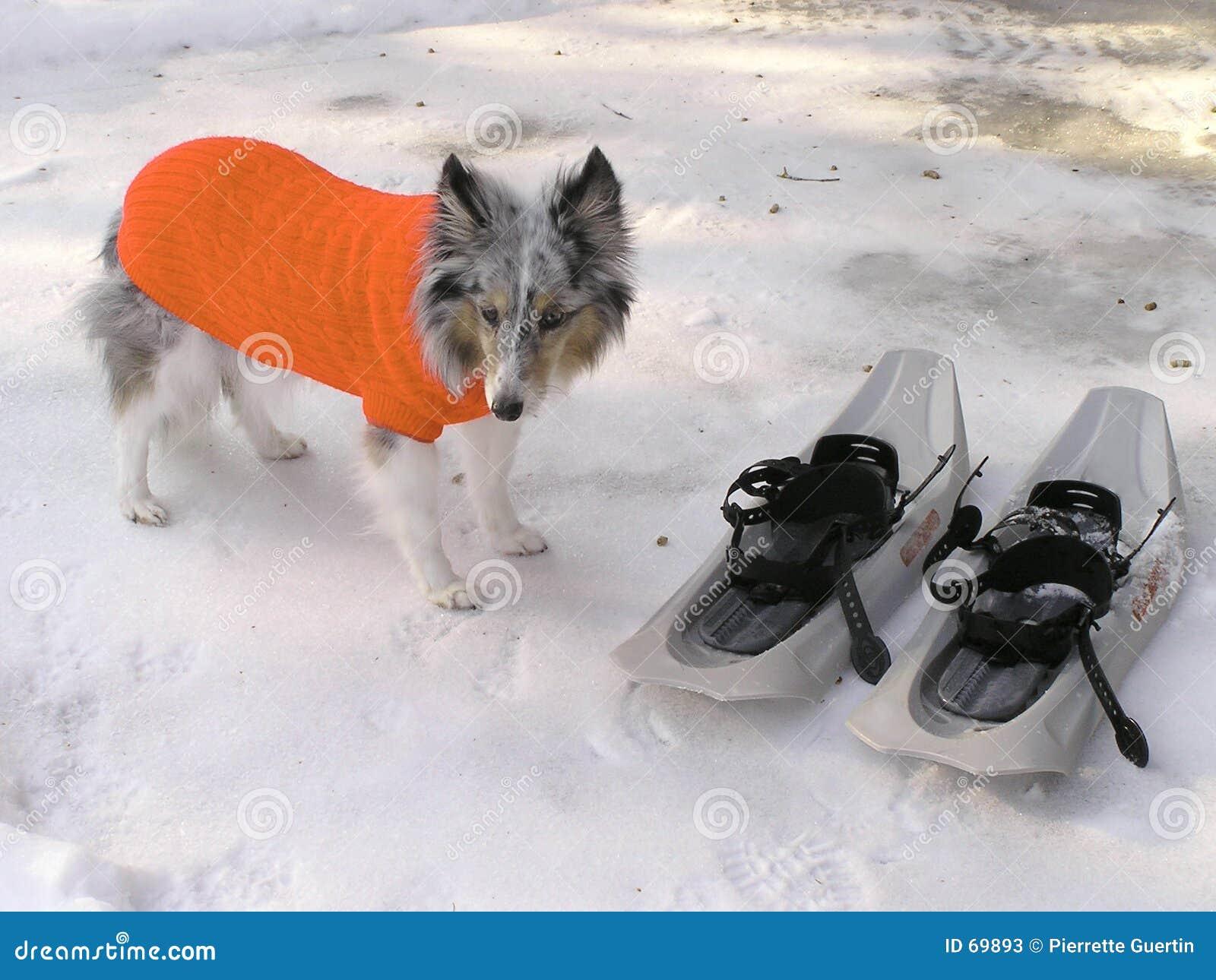 Cão em seu revestimento do inverno