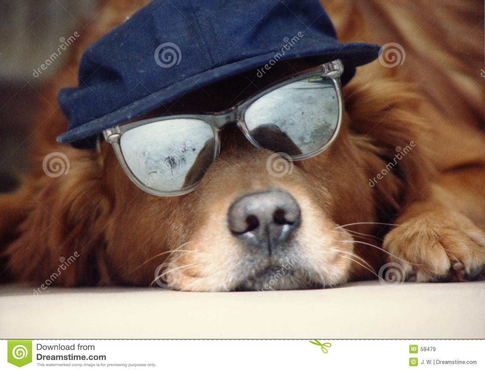 Cão em um chapéu