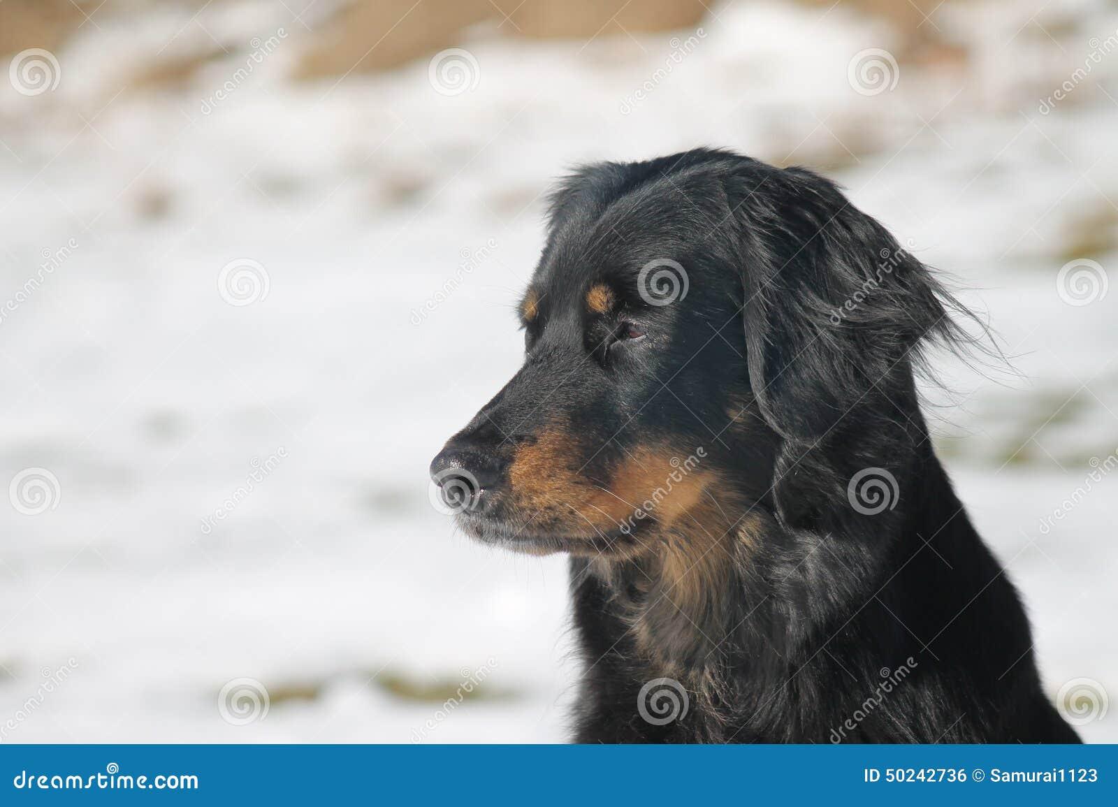 Cão encantador