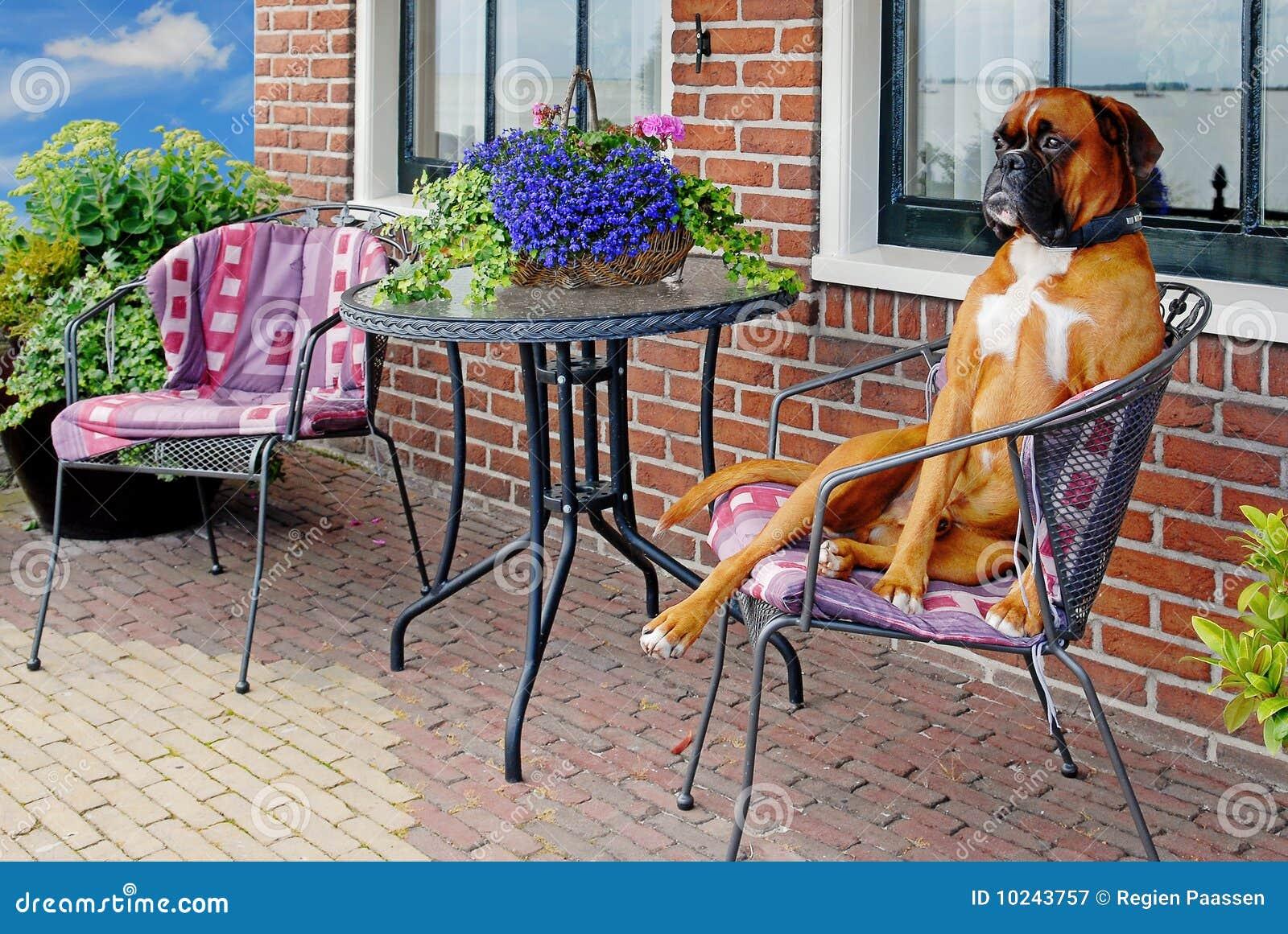 Cão engraçado