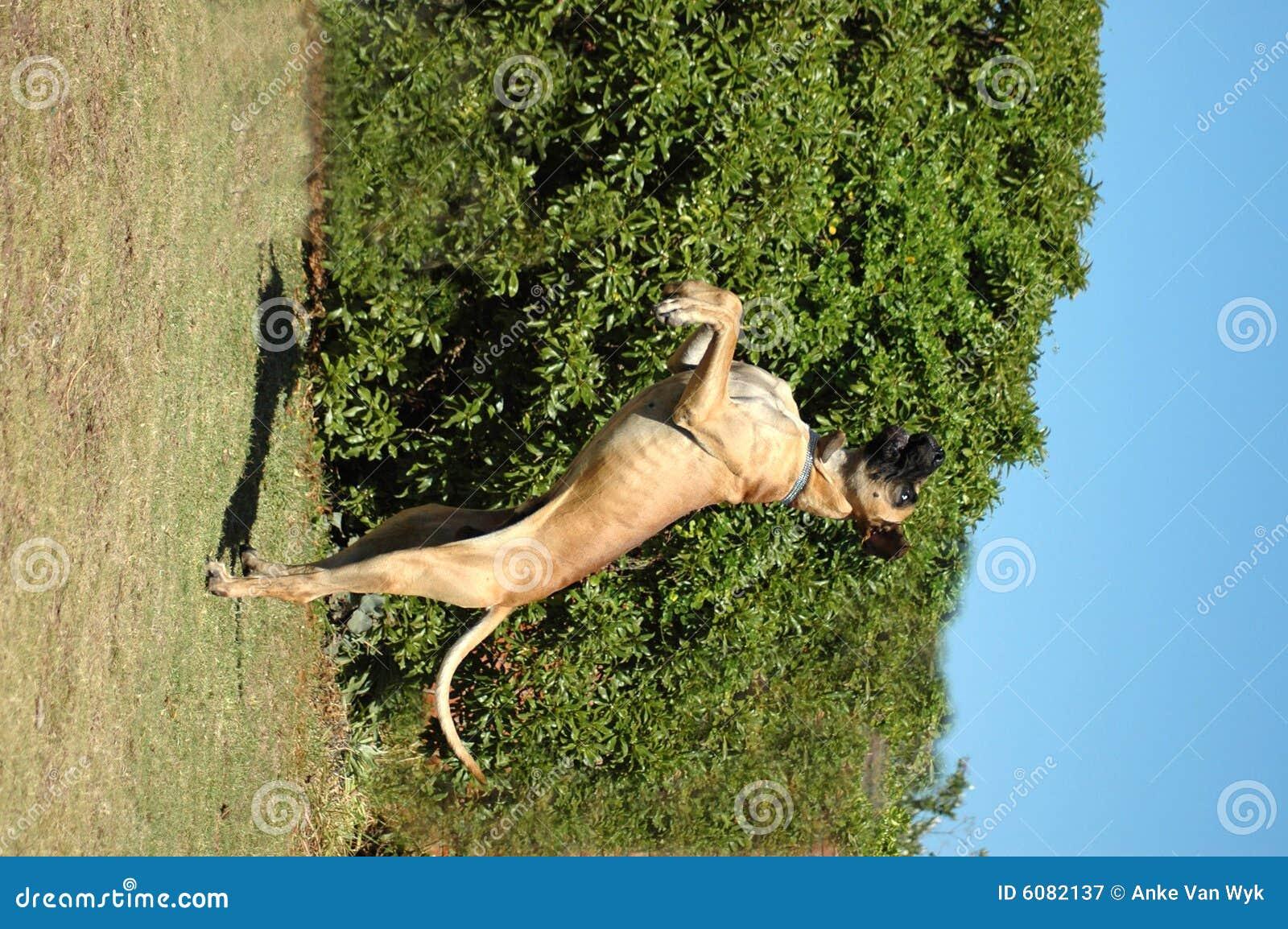 Cão engraçado do circo
