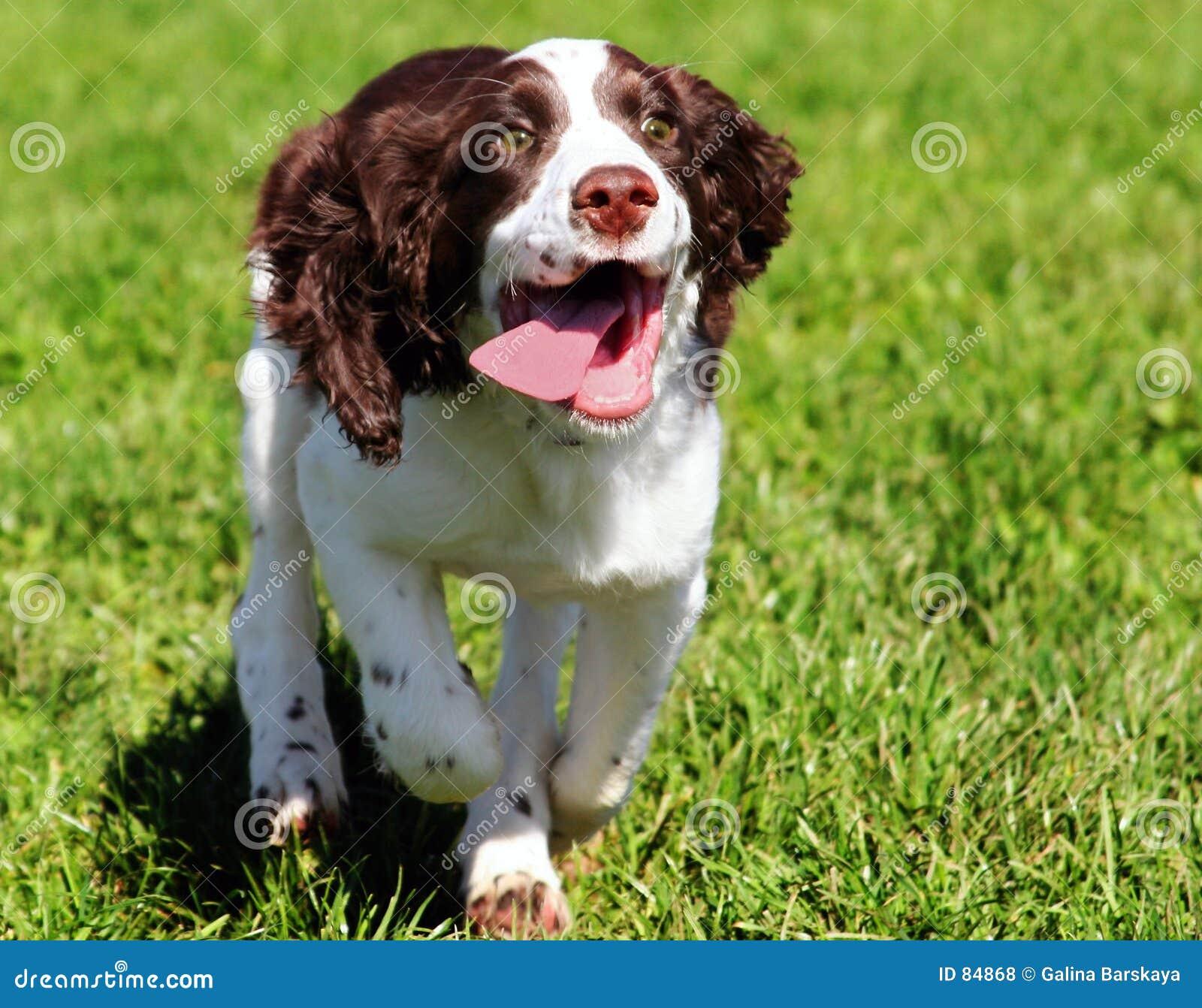 Cão feliz
