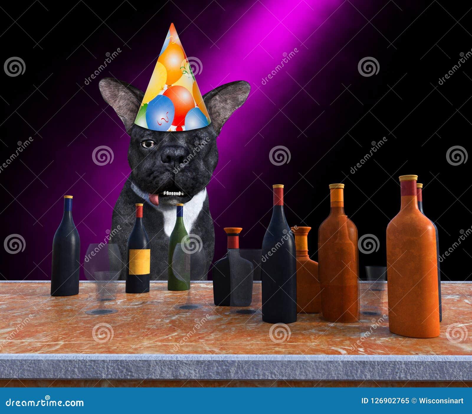Cão feliz engraçado da festa de anos, bebendo, álcool