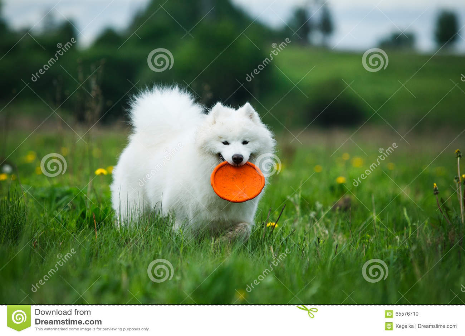 Cão feliz na caminhada