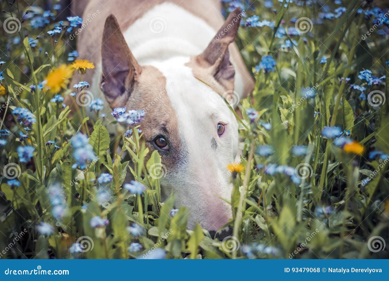 Cão, flores, tristes