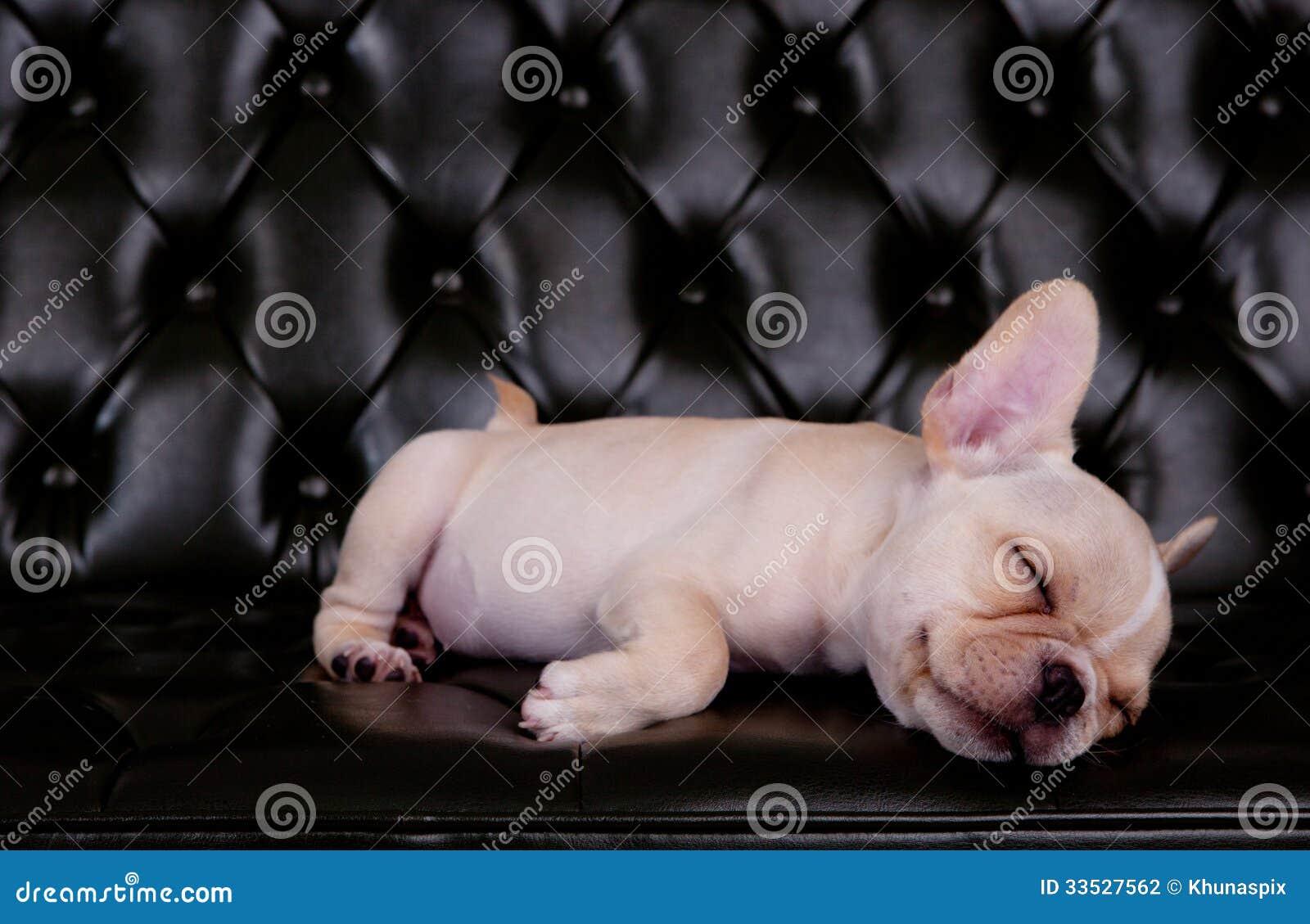 Cão francês do touro que asleeping na mesa preta do sofá