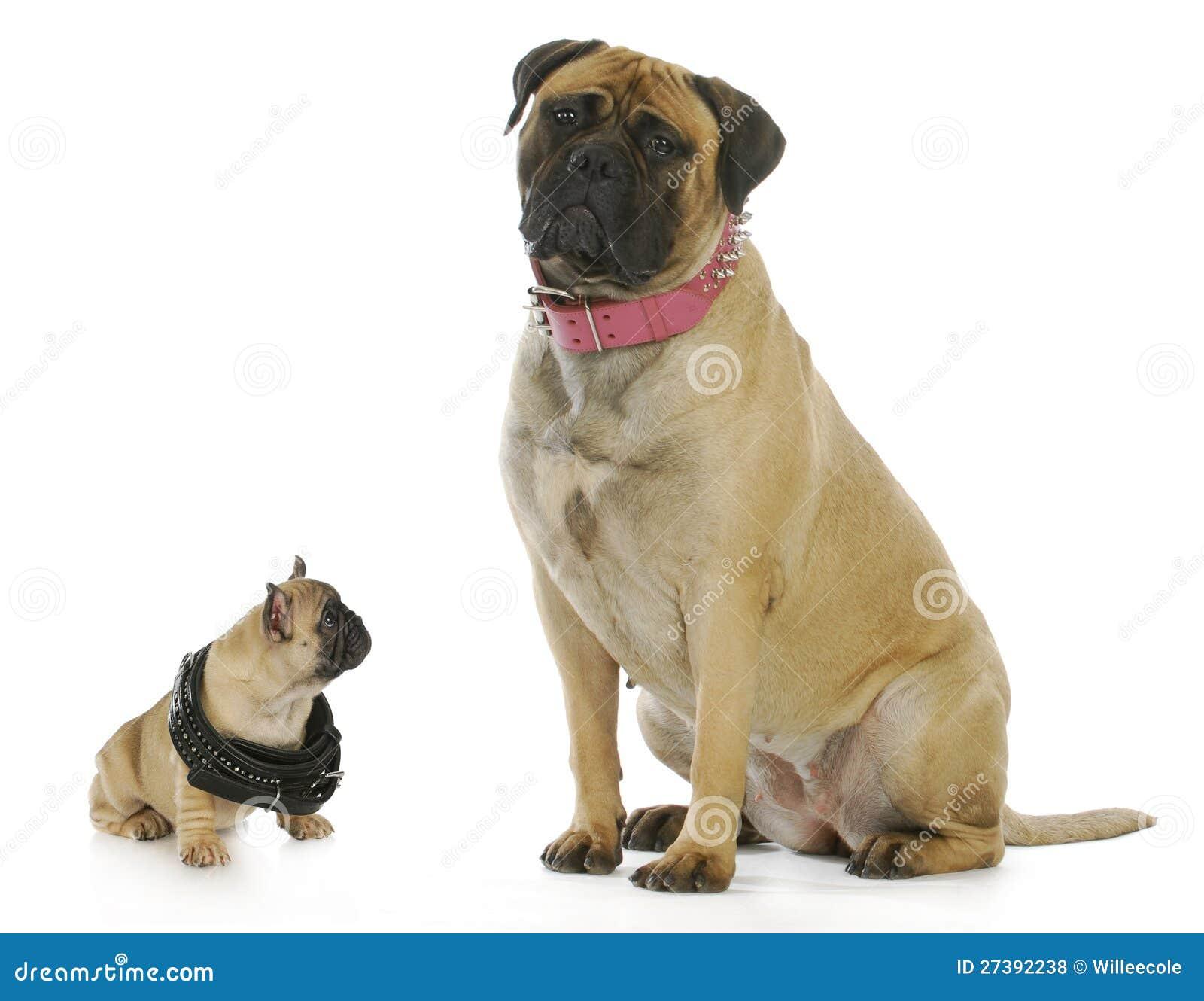 Cão grande e pequeno