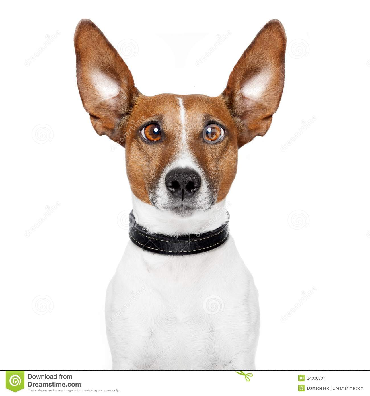 Background Noise Good For Dogs