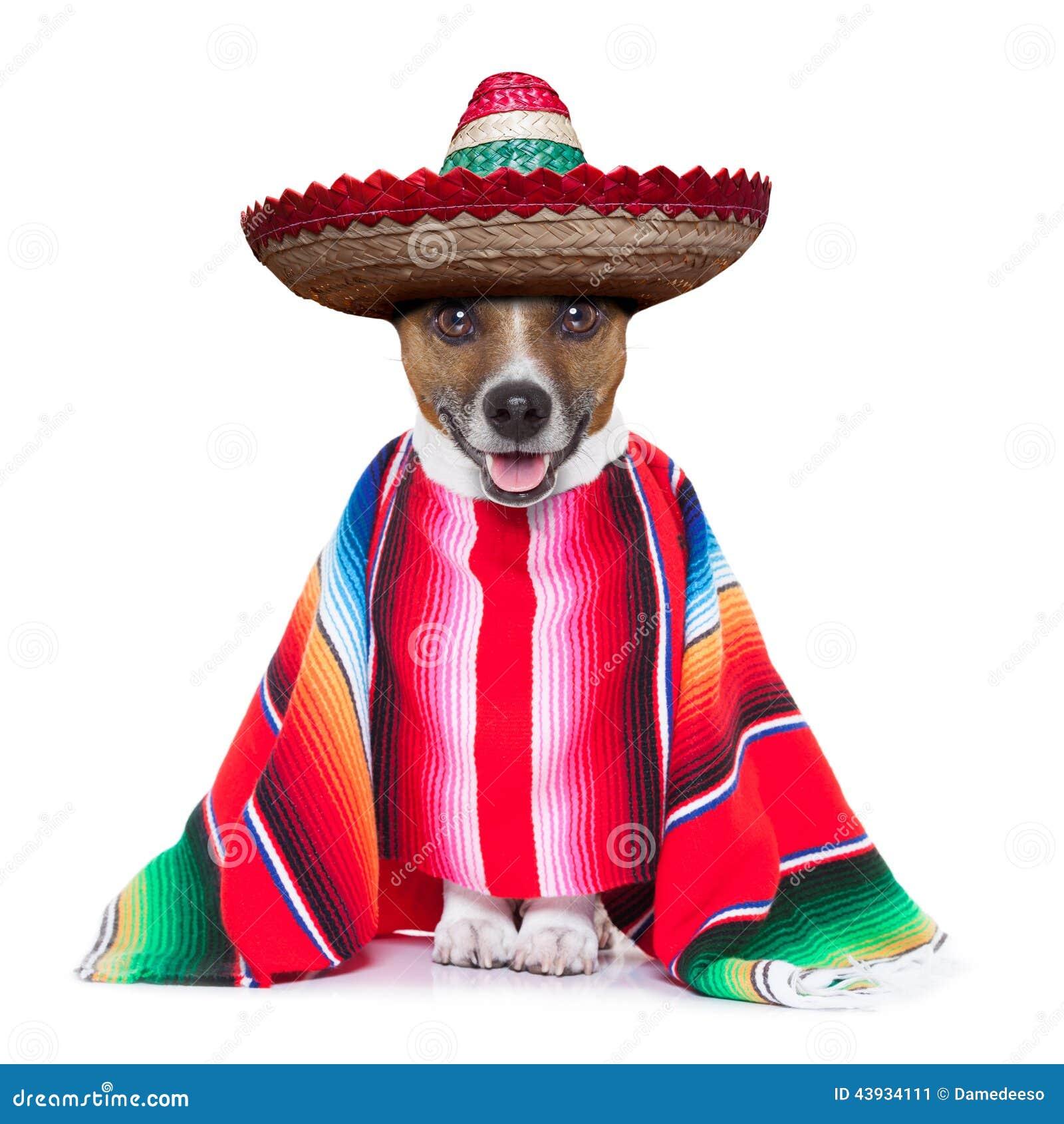 Cão mexicano