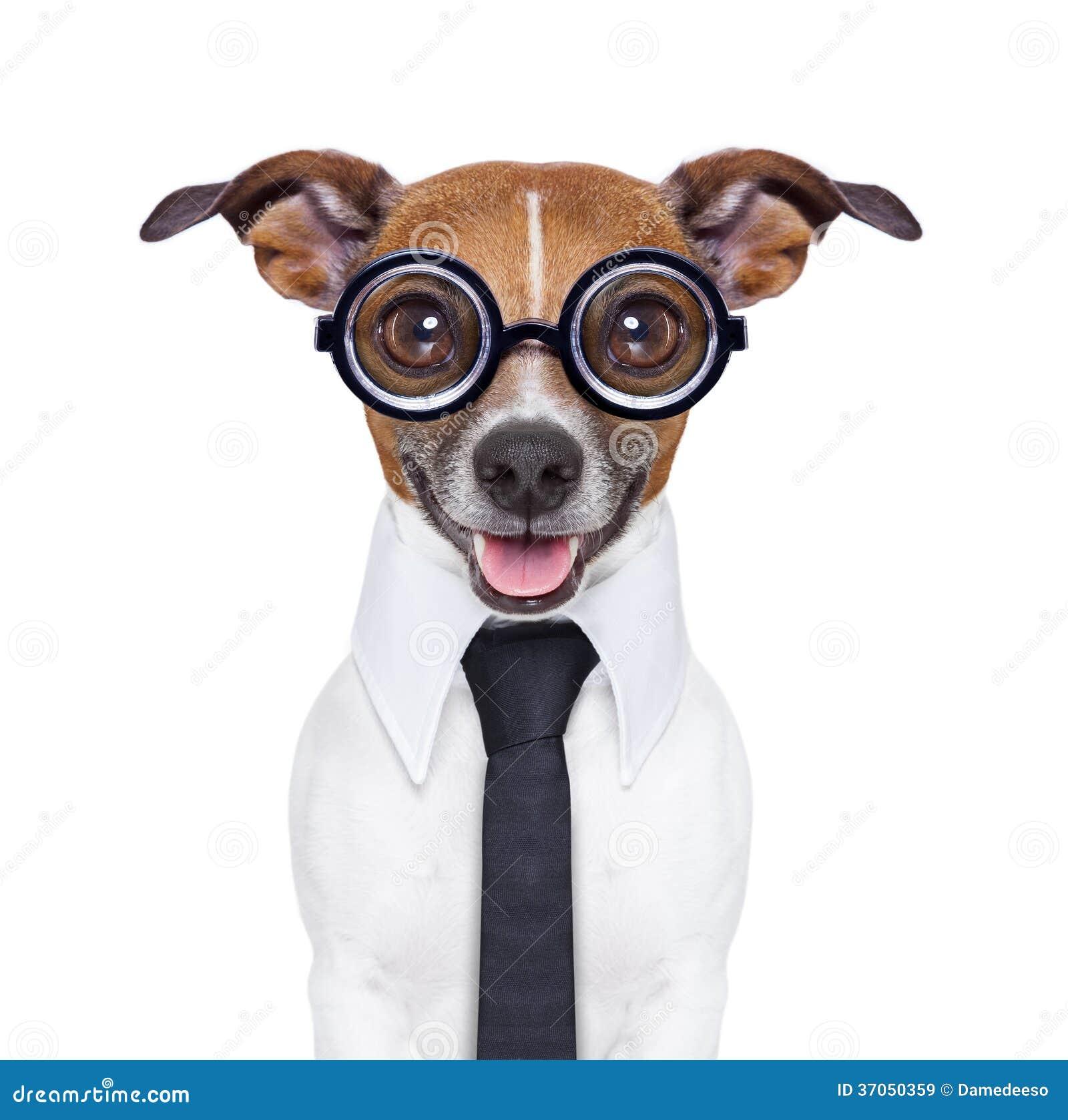 Cão mudo do negócio