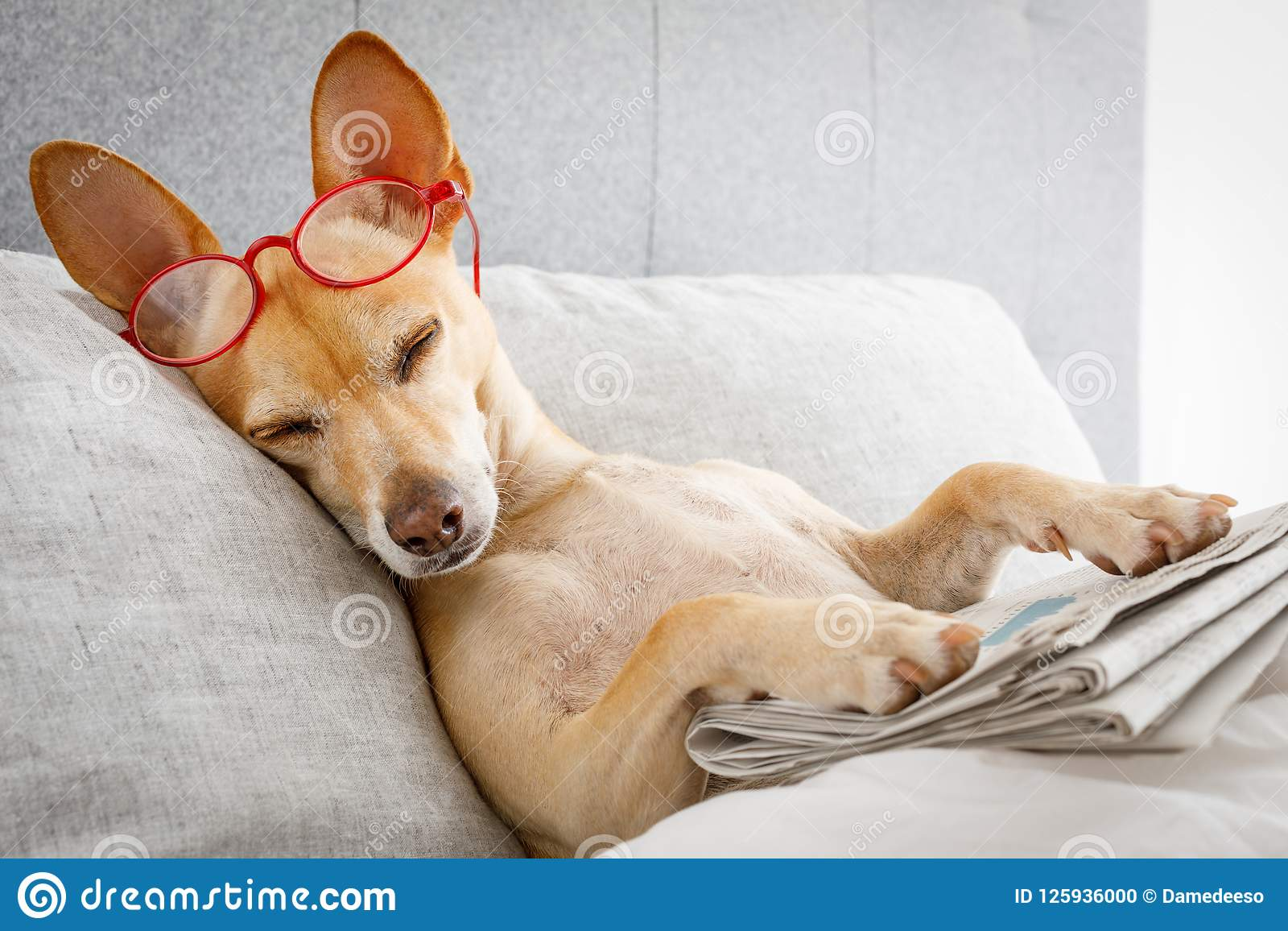 Cão na cama com jornal