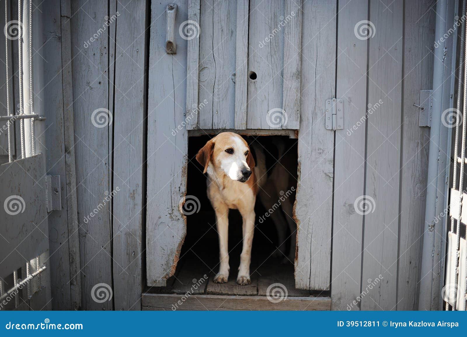 Cão na casa de cachorro