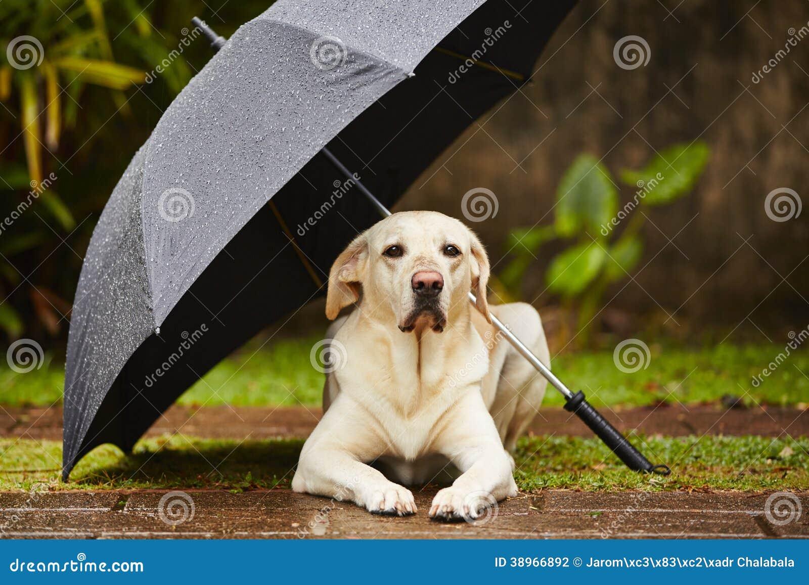 Cão na chuva