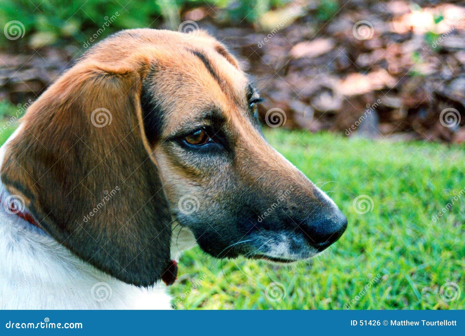 Cão na cor