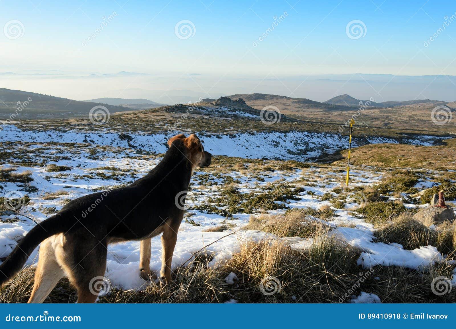 Cão na montanha