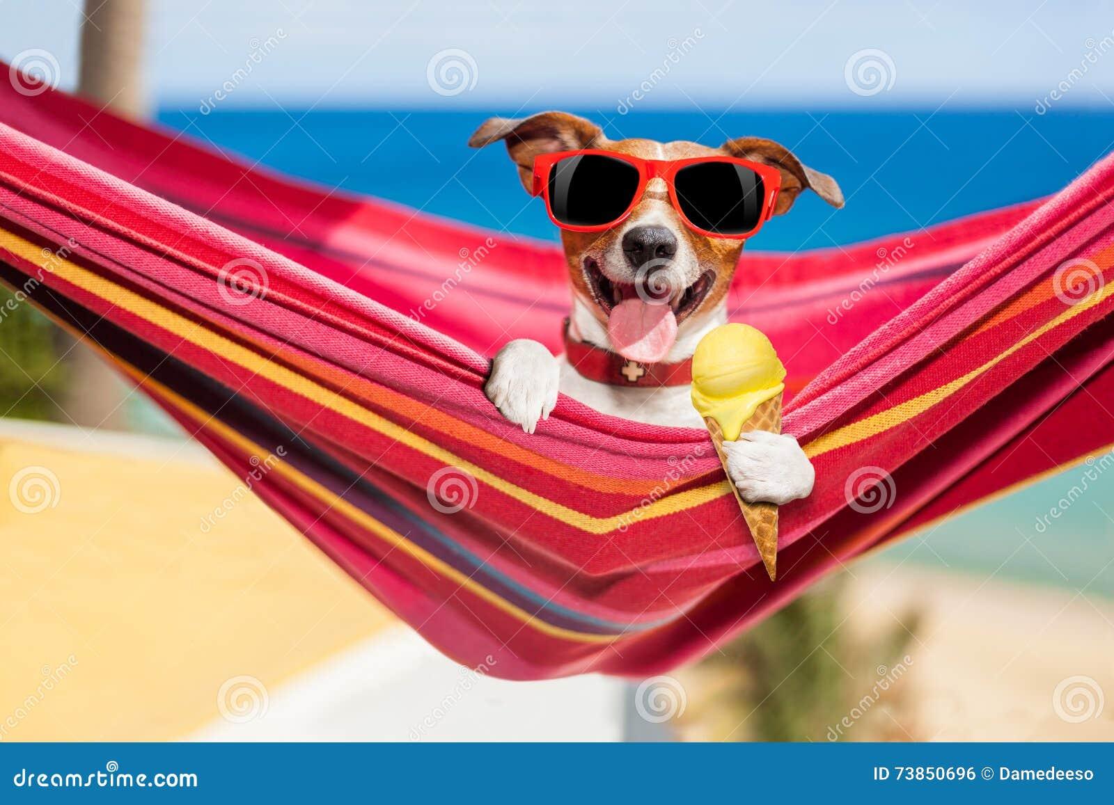 Cão na rede no verão com gelado