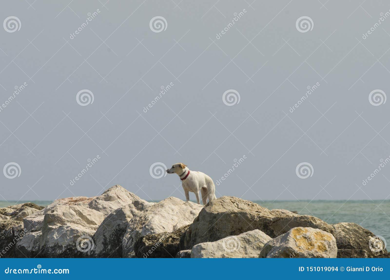 Cão nas rochas que procuram alguém