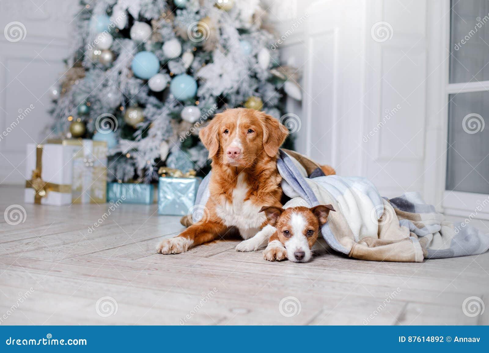 Cão no cenário, o feriado e o ano novo, o Natal, o feriado e o feliz