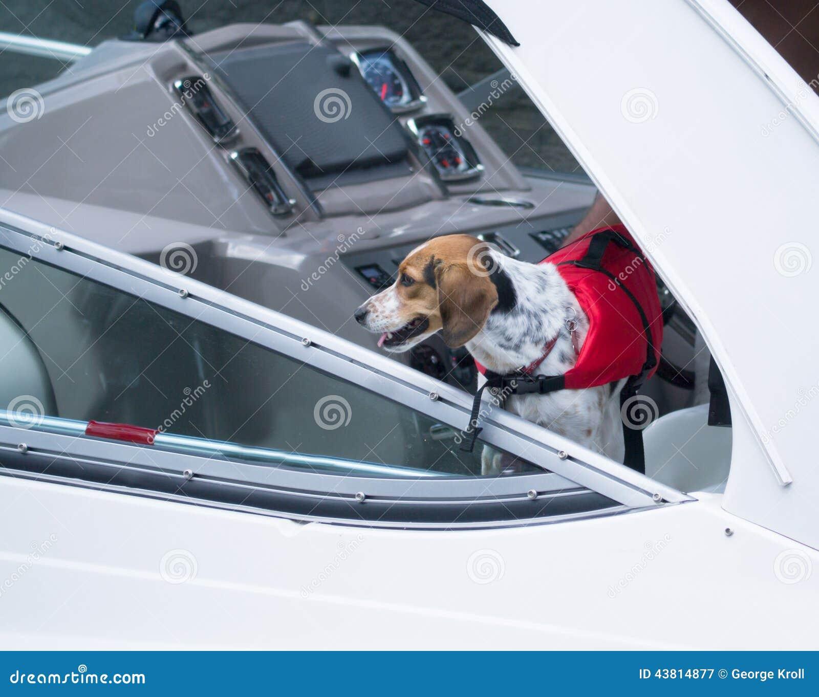 cão que aprecia um passeio em um barco ao vestir sua veste de vida #BA113C 1300 1124