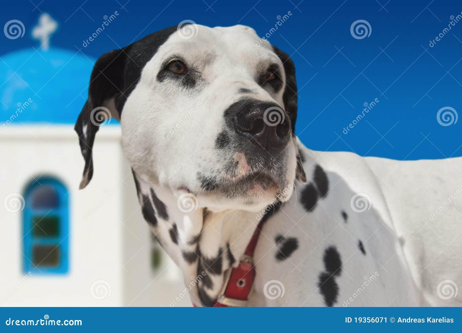Cão no console de Santorini