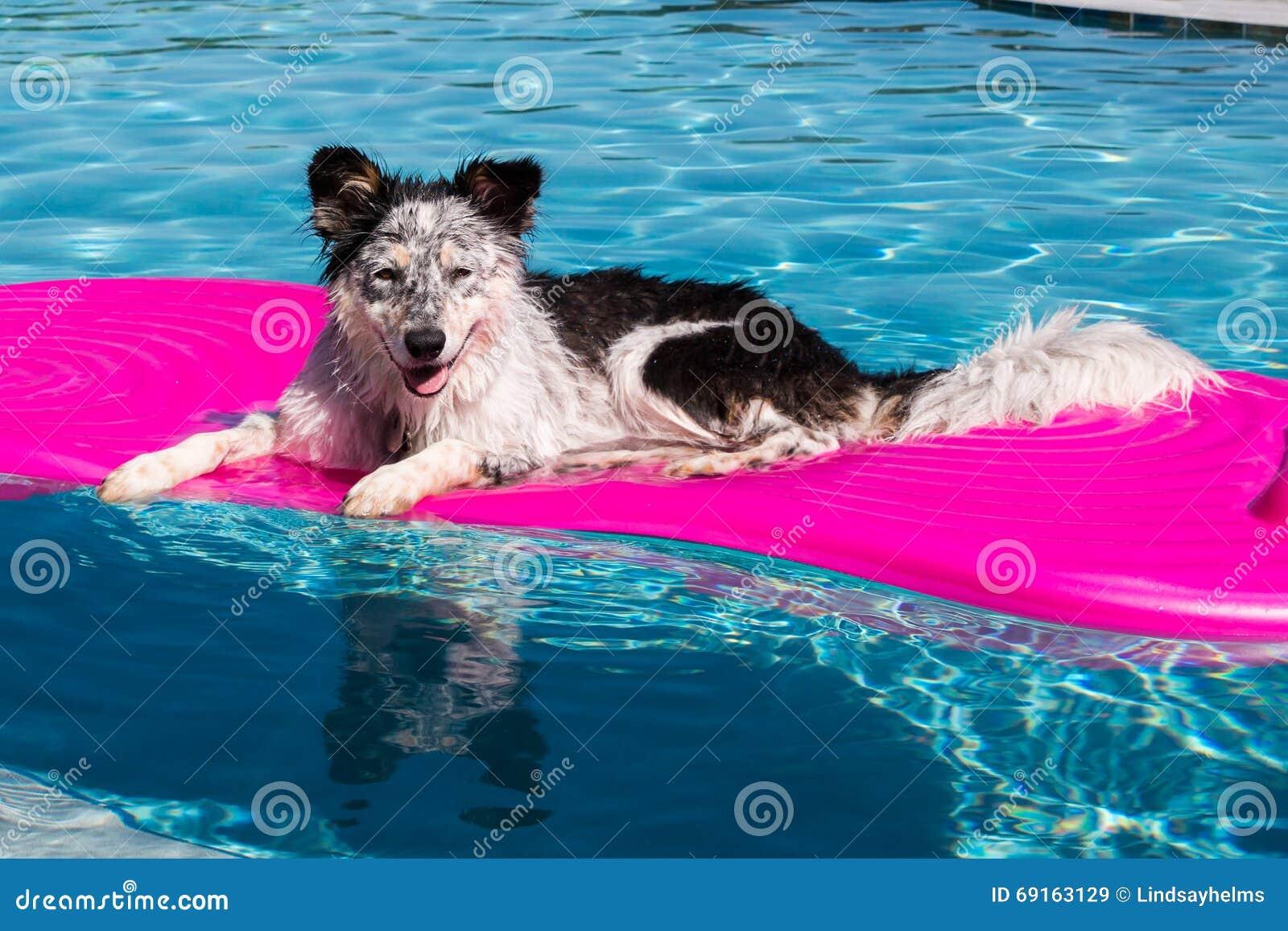 Cão no flutuador da associação