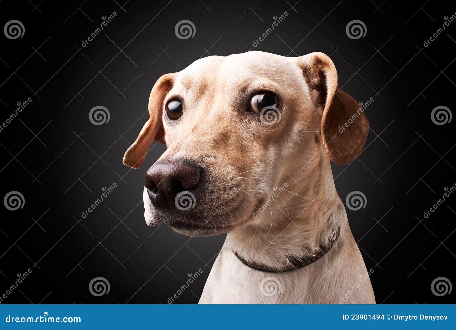 Cão no fundo preto