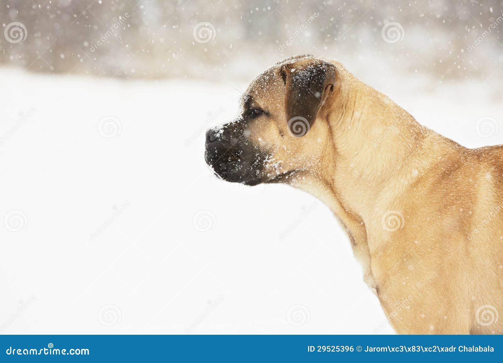 Cão no inverno