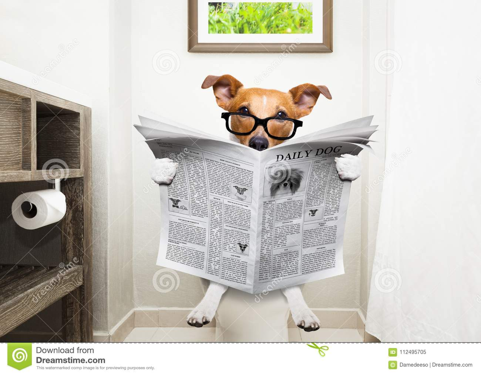Cão no jornal da leitura do assento da sanita
