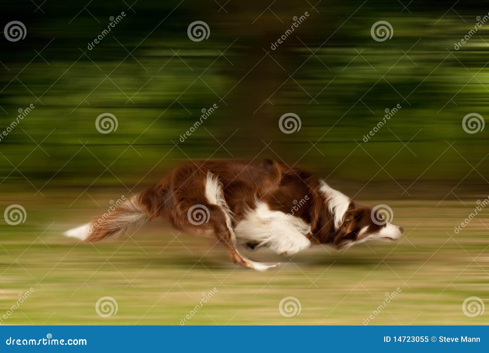 Cão no movimento