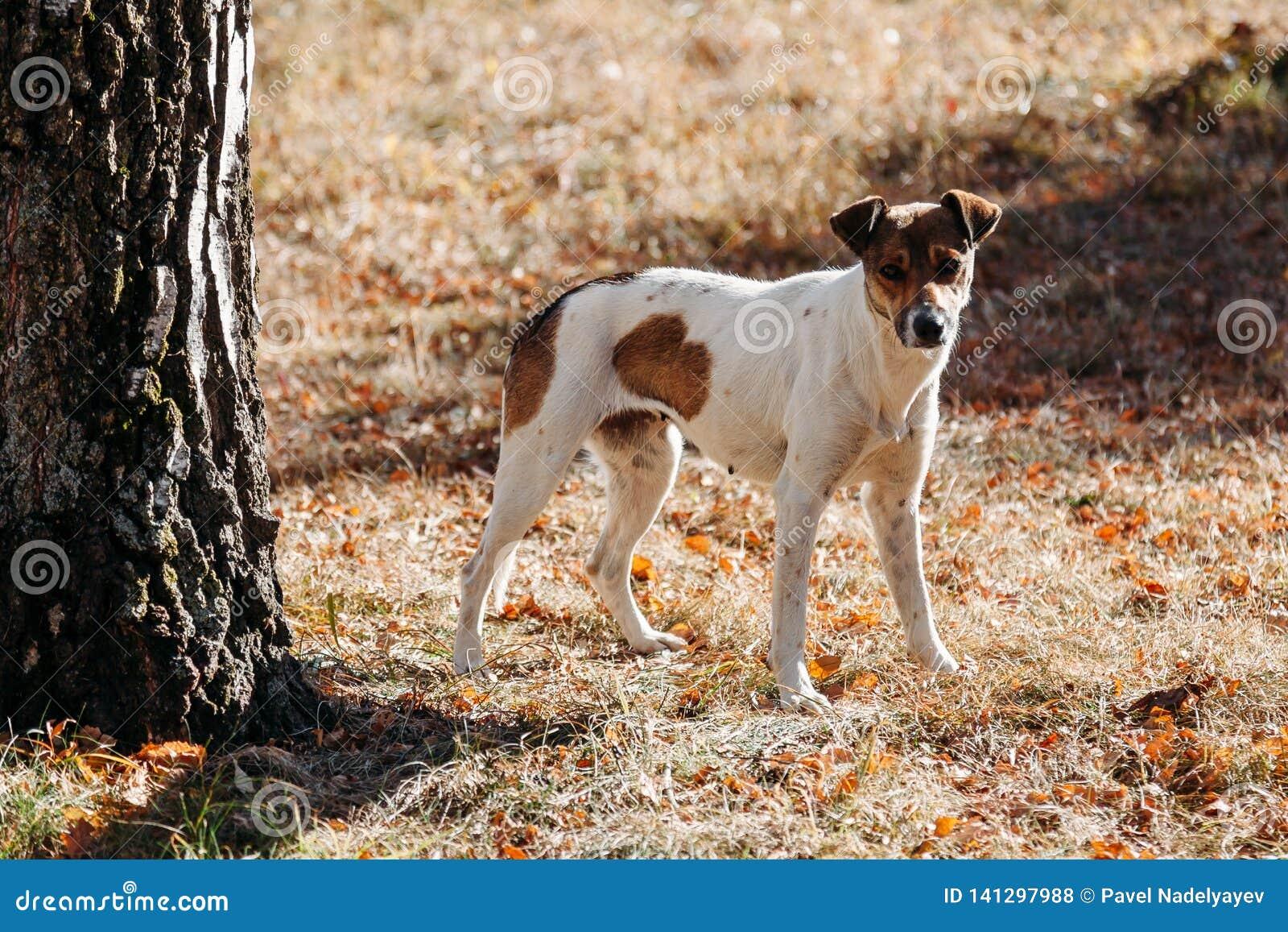Cão no parque outdoors