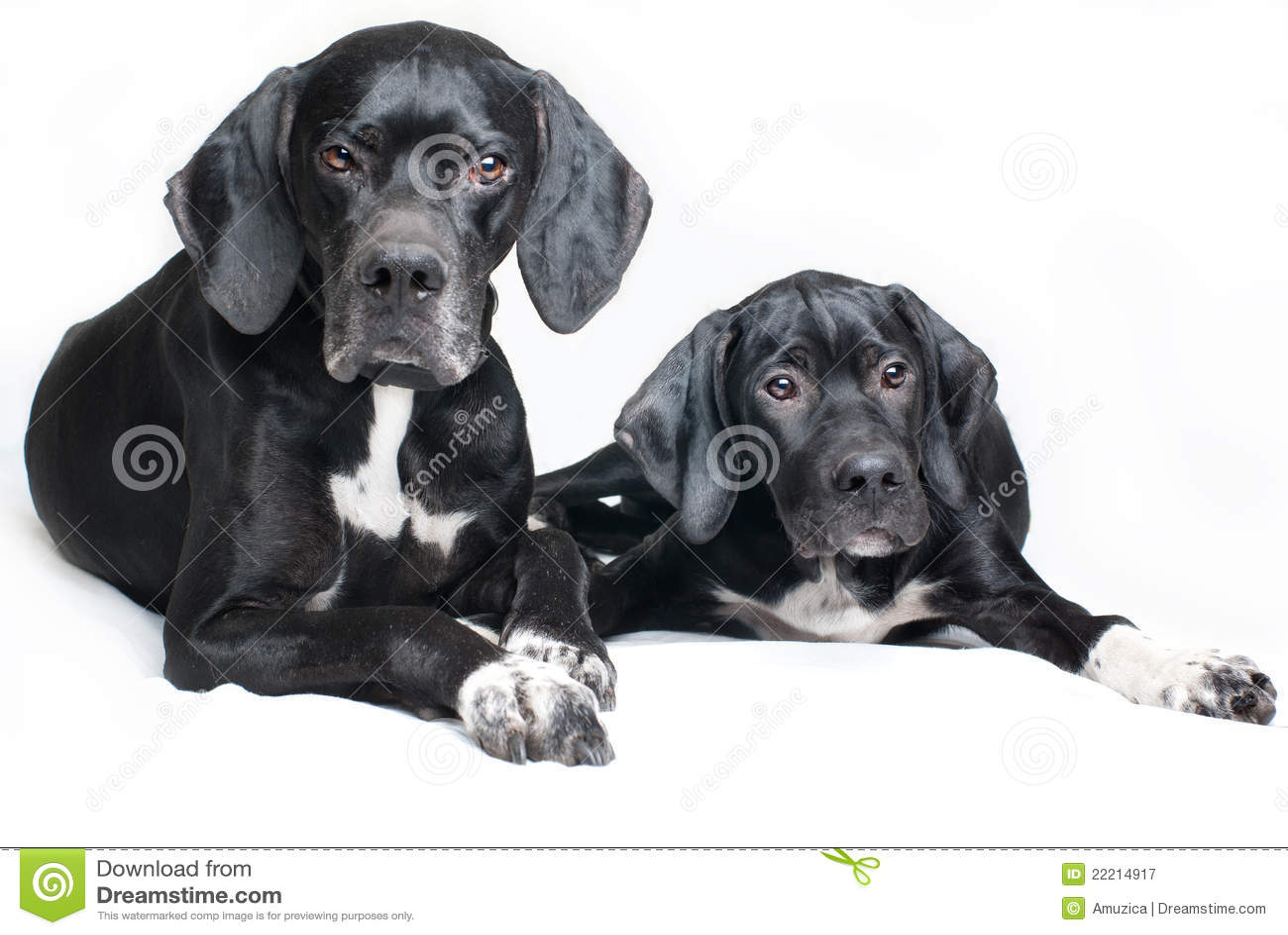 Cão, pai e filho da família