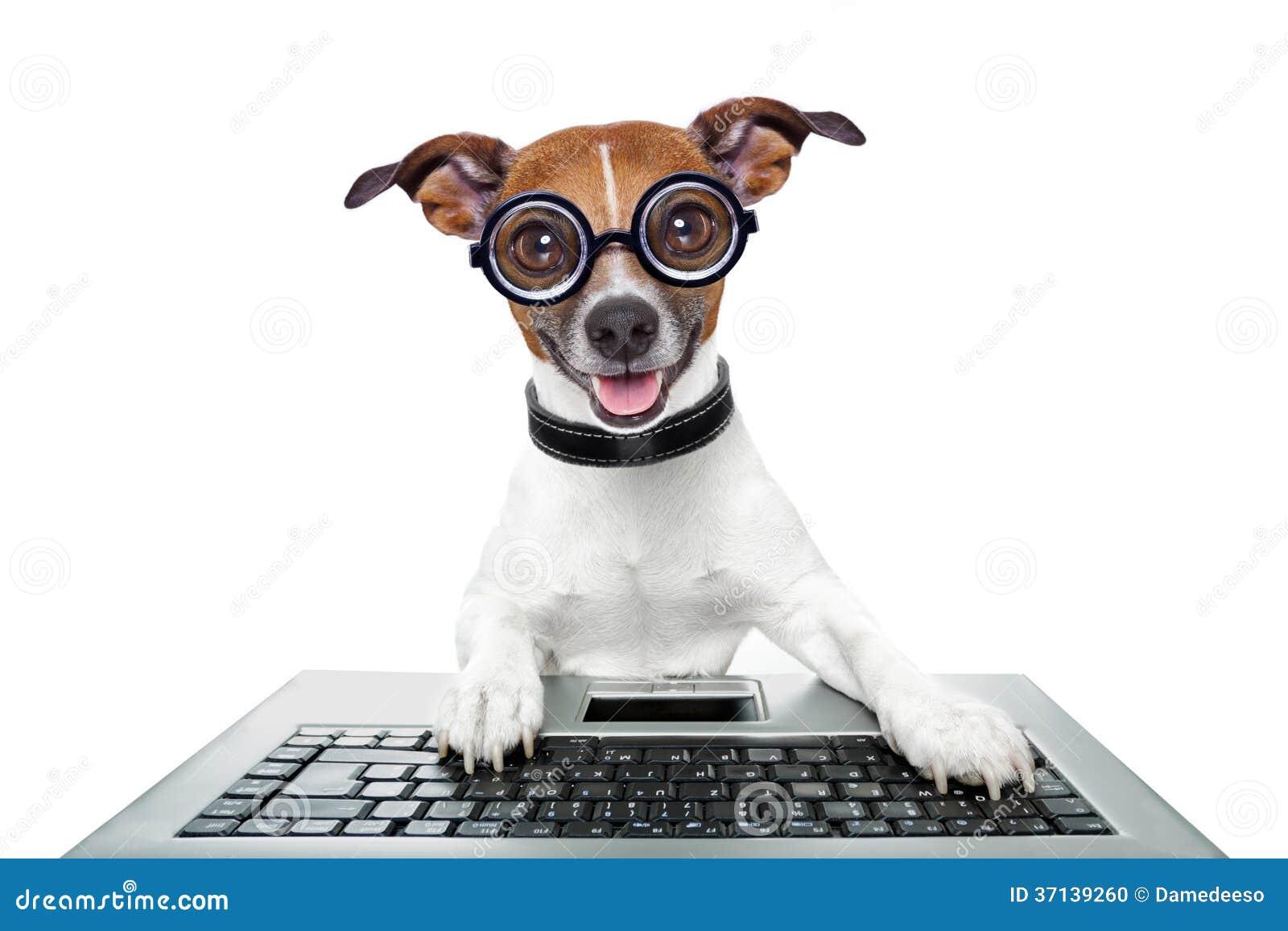 Cão parvo do computador