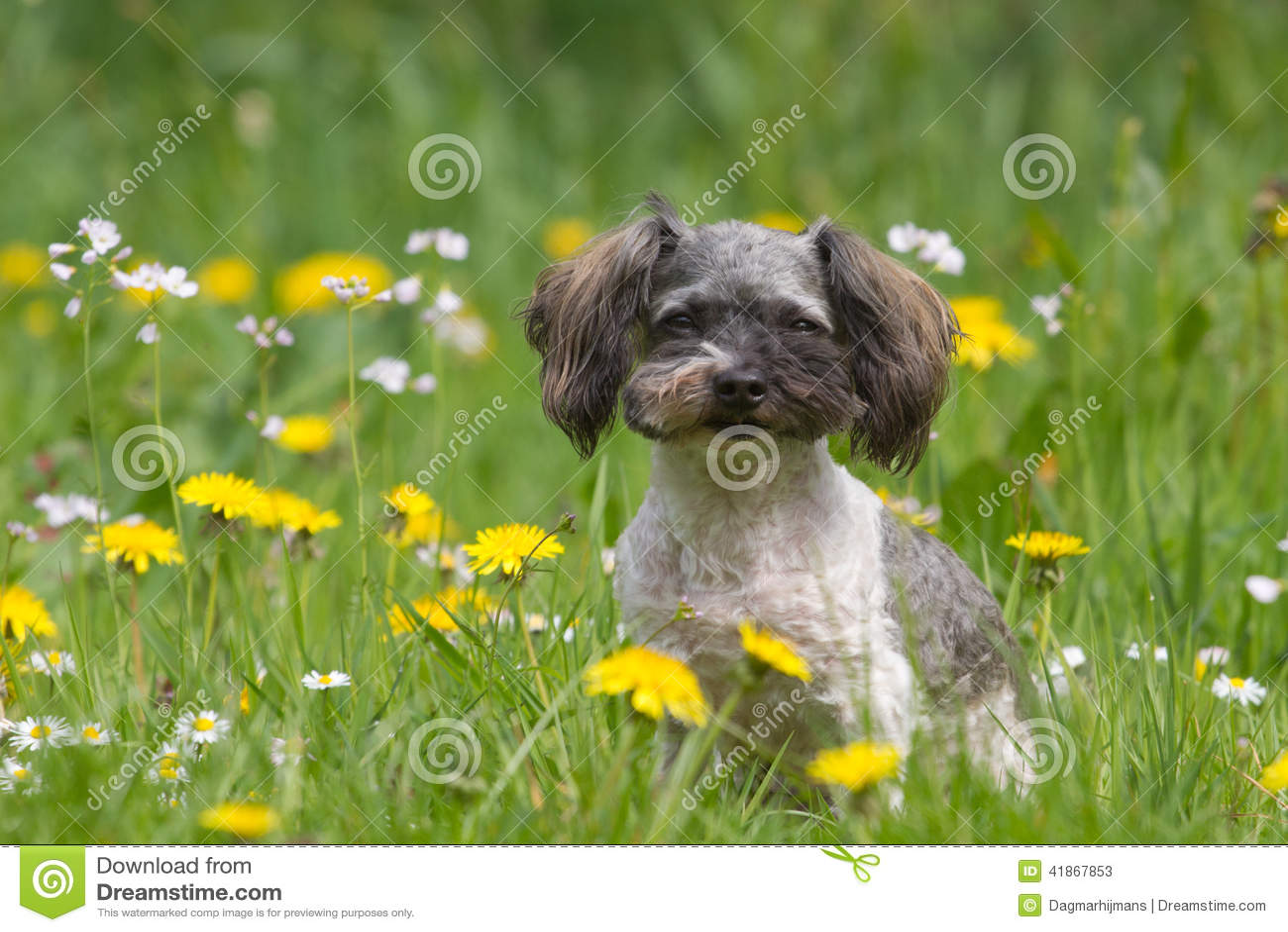 Cão pequeno do boomer com flores