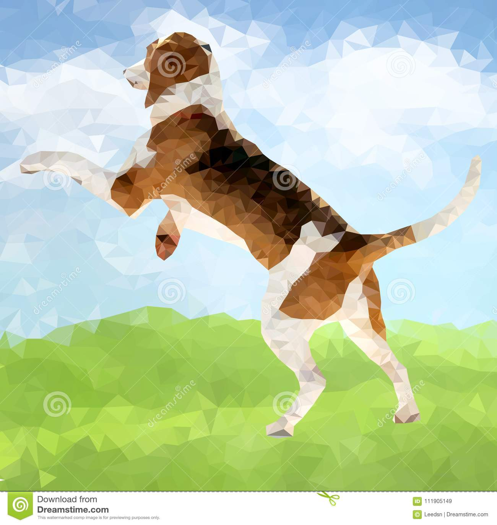 Cão poli Outdoors-05