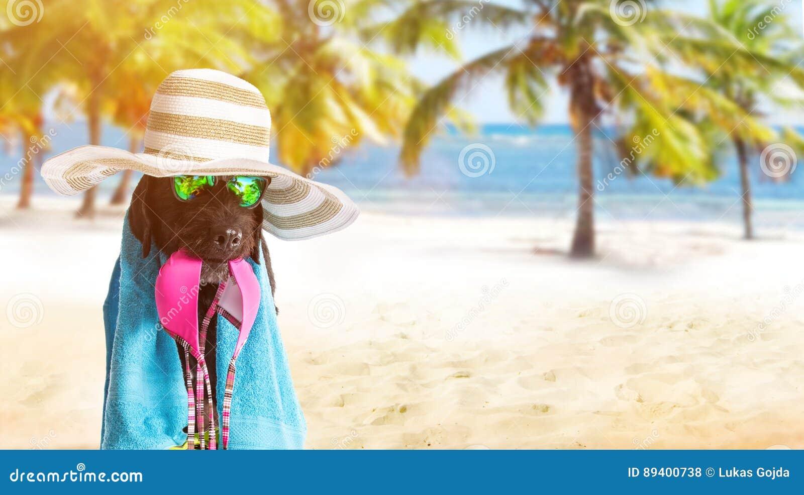 Cão preto engraçado em um Sandy Beach