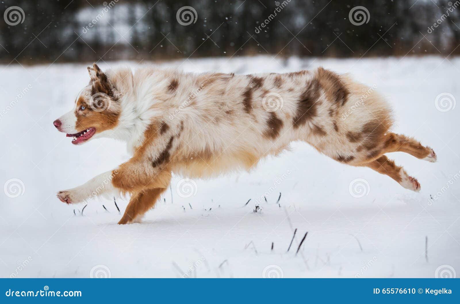 Cão que corre no parque coberto de neve