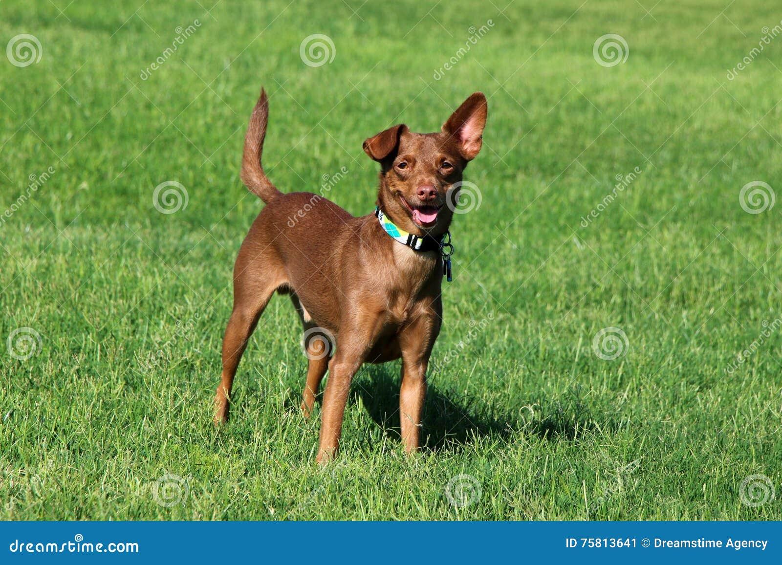 Cão que está na grama