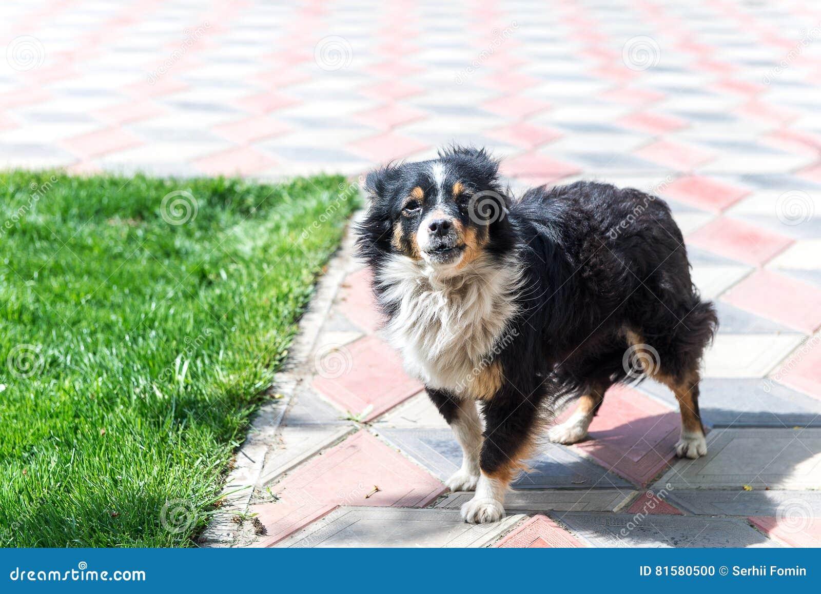 Cão que guarda a jarda dos ladrões canine Cão ao ar livre