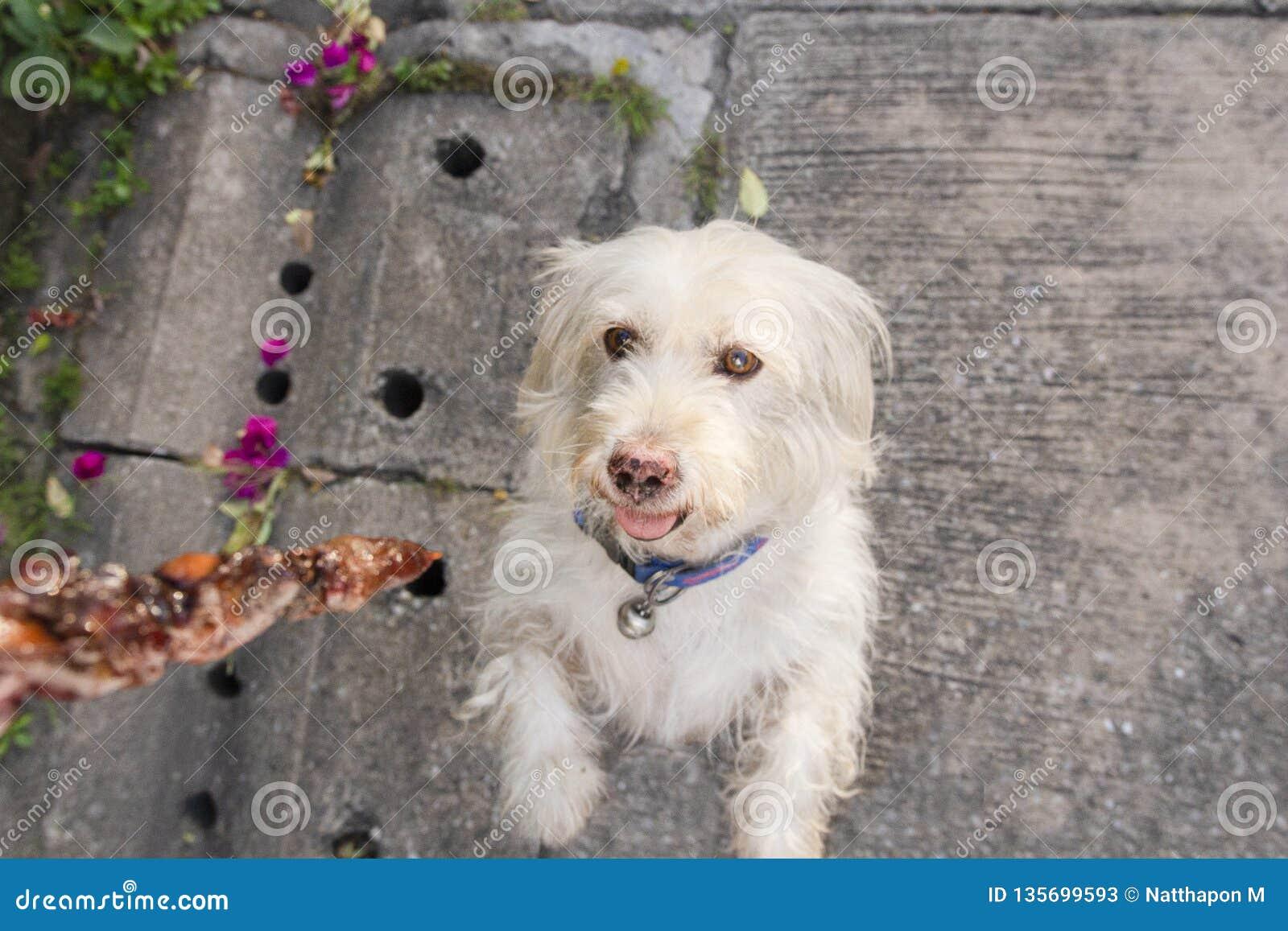 Cão que obtém o alimento do proprietário na rua Foco no cão