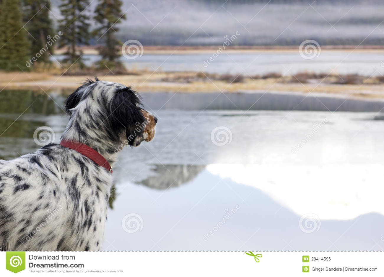 Cão que olha para fora sobre o lago