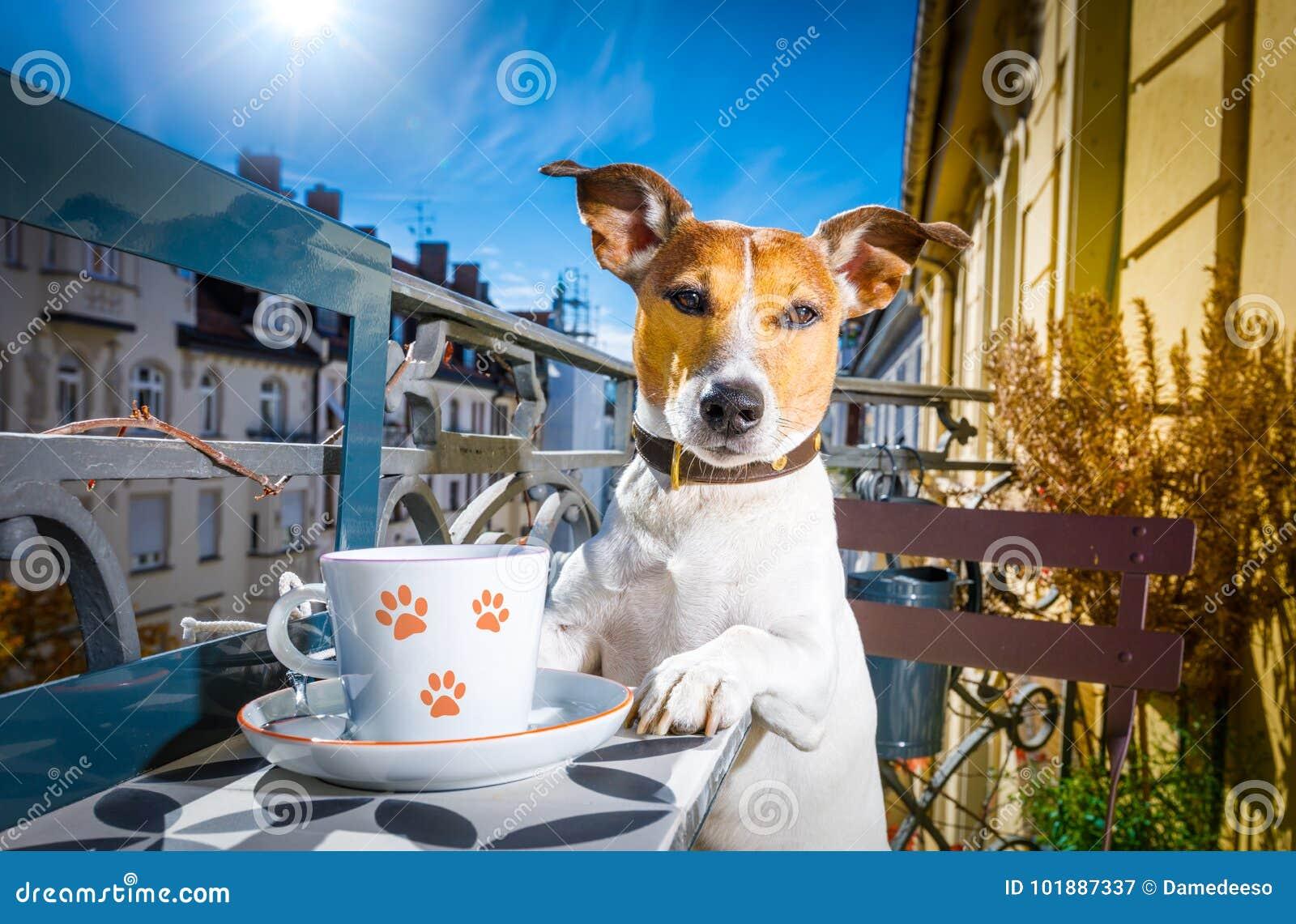 Cão que tem uma ruptura de café
