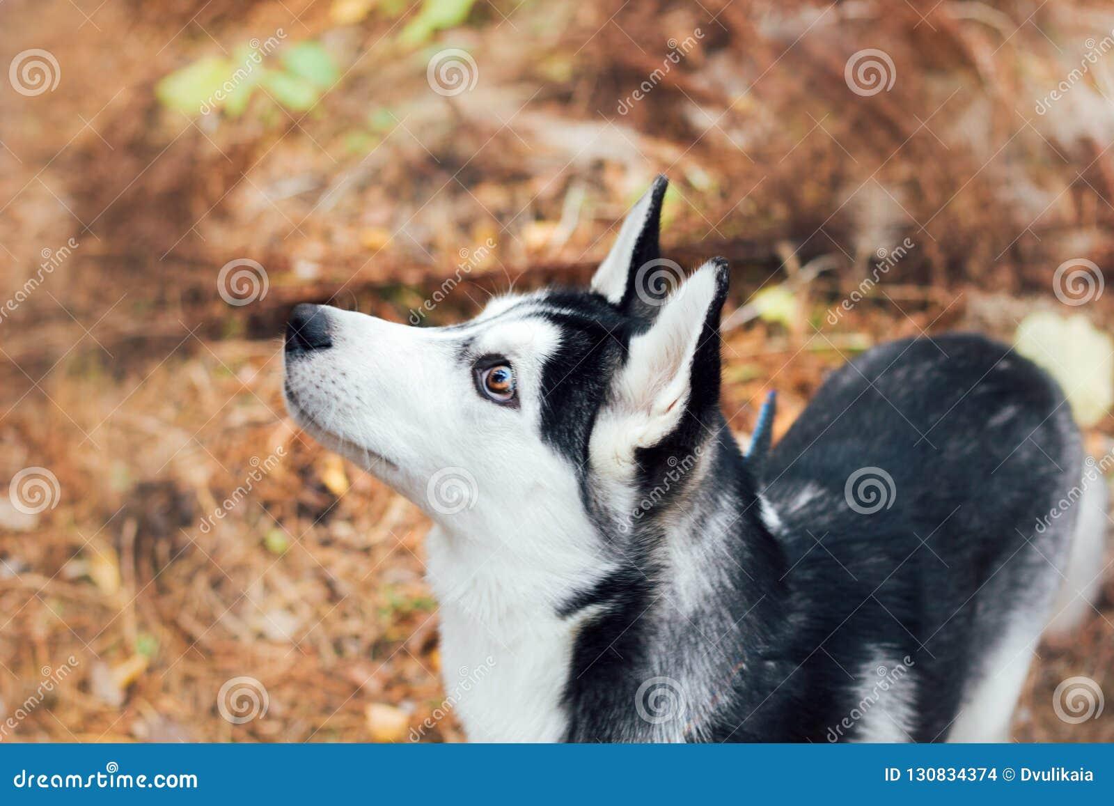 Cão ronco no parque