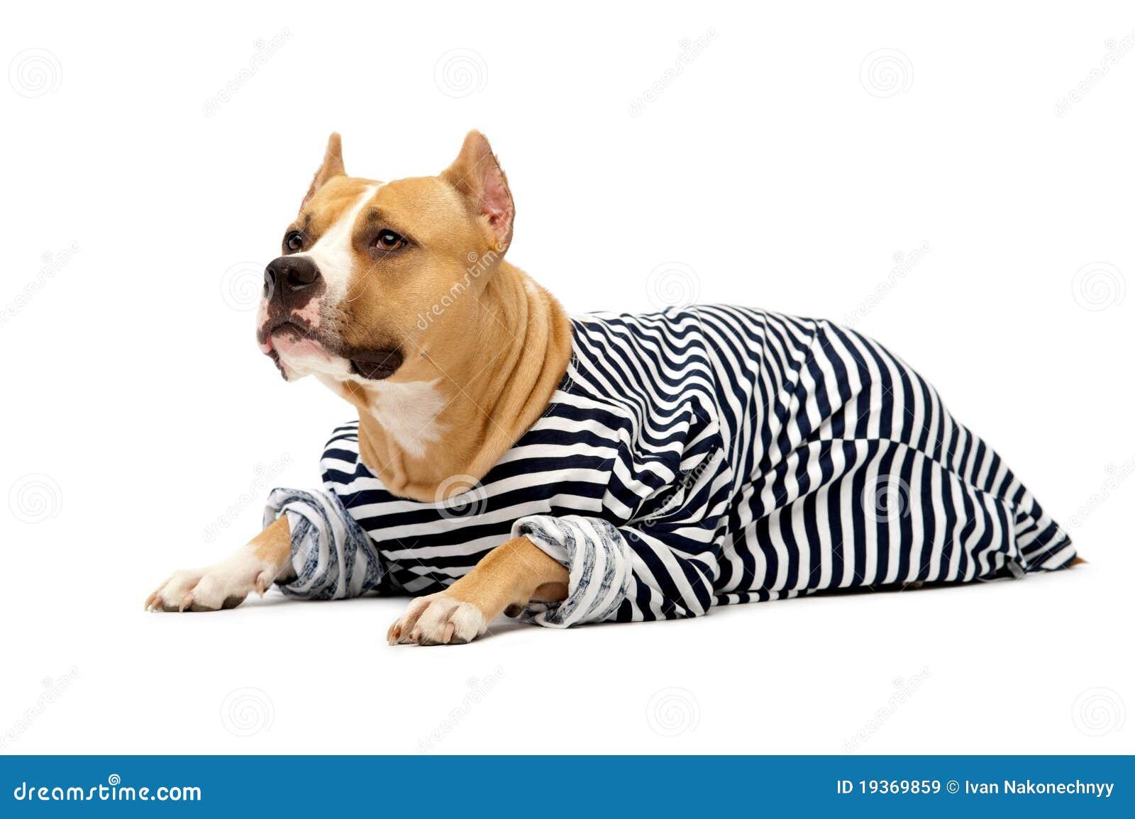Cão sob a forma de um marinheiro