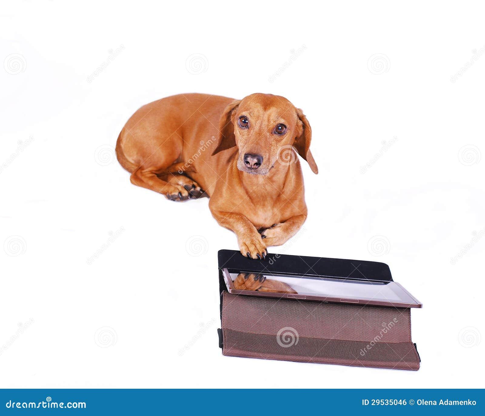 Cão usando o computador