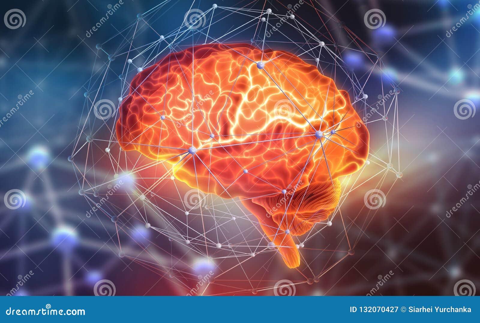 Cérebro humano Redes neurais e inteligência artificial