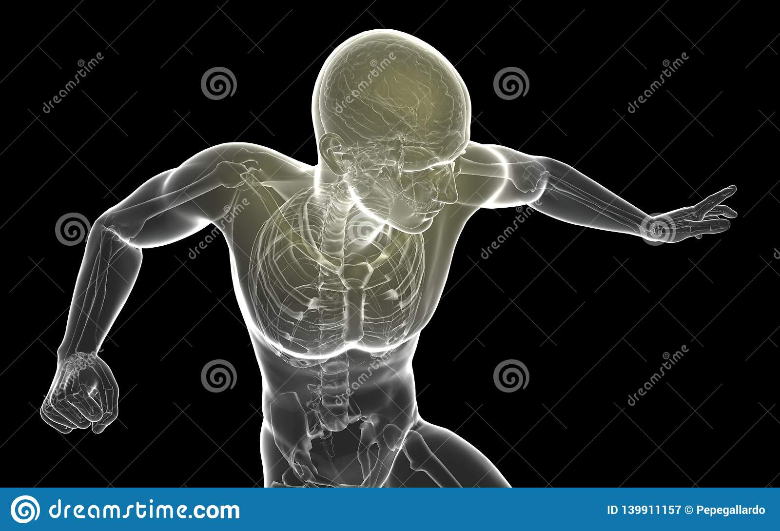 Cérebro proeminente transparente do corpo humano da ilustração 3D - ³ n de IlustraciÃ